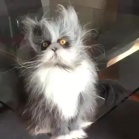 ешкин кот картинки