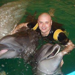 Виктор, 37 лет, Ильичевск - фото 1