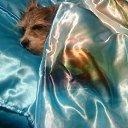 Фото Беатриче, Краснодар, 42 года - добавлено 13 января 2014 в альбом «Мои зверюшки»
