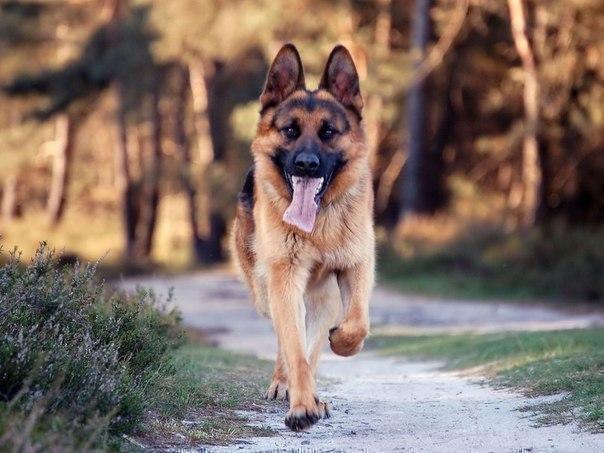 Собаки очень верные. Жаль только то, что их жизнь короче людской.