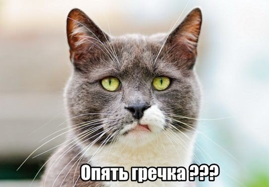Кот фу фото