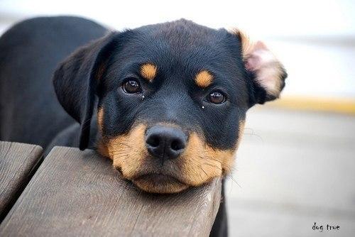 Прости мам, что предпочла людям собаку.Прости за синяки и шрамы, пойми, ему помочь было надоПрости ...