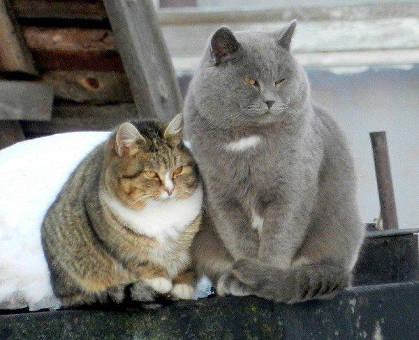 Рождения, толстые кошки картинки с надписями