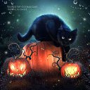 Фото Пыль Котёна, Москва - добавлено 30 октября 2015 в альбом «Черный кот»