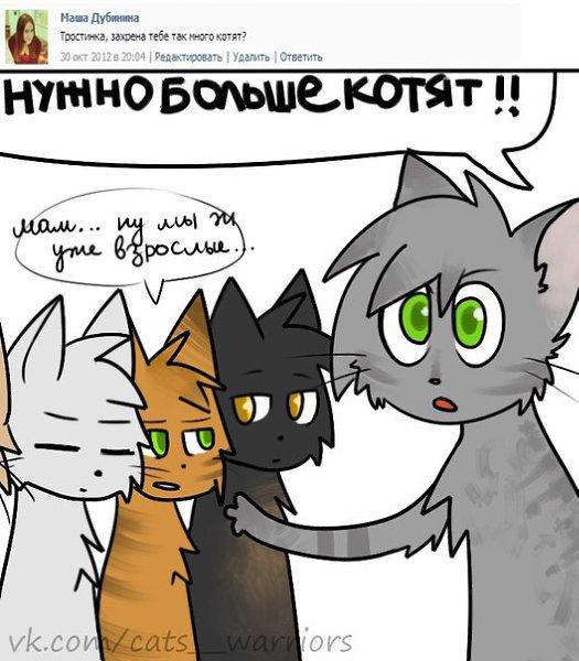 Поздравление рождением, коты воители смешные картинки с надписями до слез