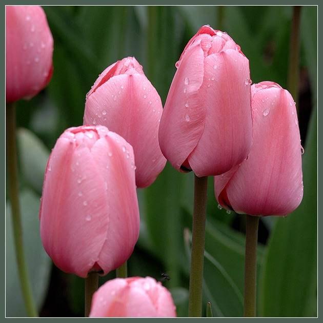 Женщина — бутон. Или завянет, или расцветет, или распустится… Зависит от характера и от судьбы, а ...