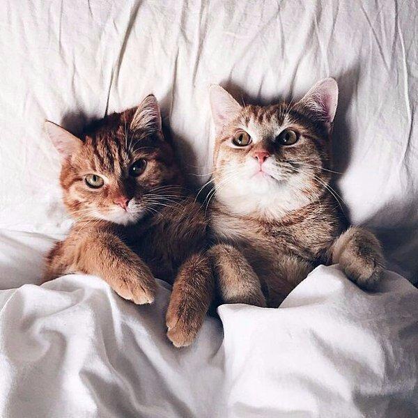 Дню, картинка с добрым утром котики обнимаются