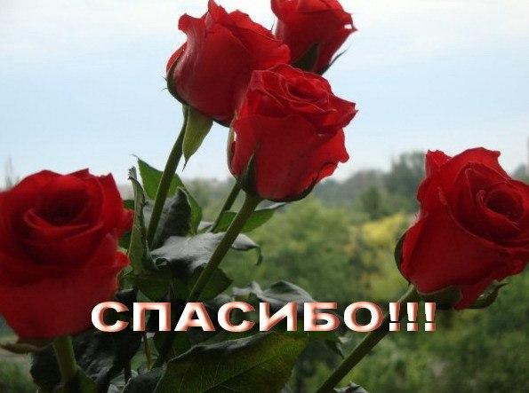 Открытки спасибо за розы, туймазы картинки