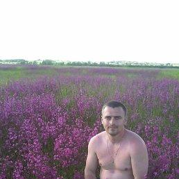 Александр Максимчук, 35 лет, Черняхов