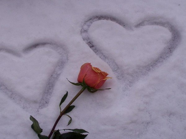 Картинки розы на снегу люблю
