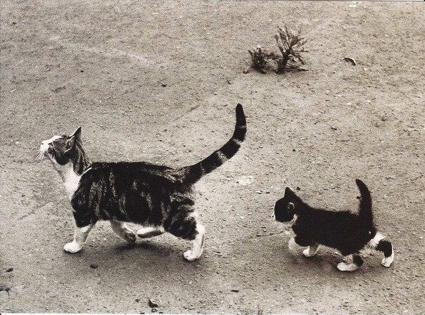 Мама, ну подожди меня! Лондон, 1952 г.
