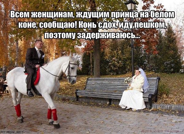 Картинки жду принца на белом коне