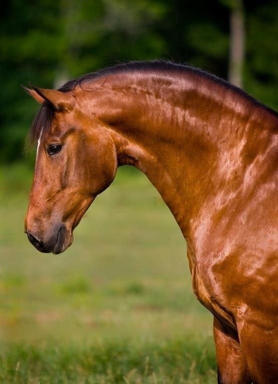 Лошади - это мой мир! - 29 ноября 2018 в 16:32