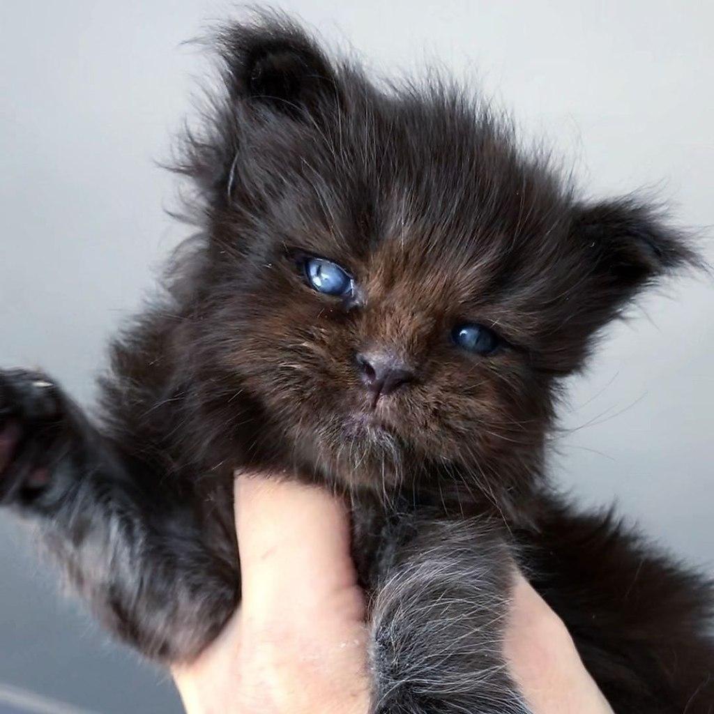 Когда хотел котёночка, но случайно завёл Хтонический Ужас - 2