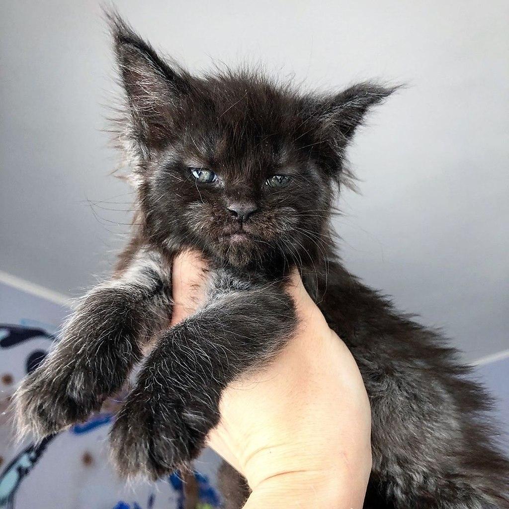 Когда хотел котёночка, но случайно завёл Хтонический Ужас - 3