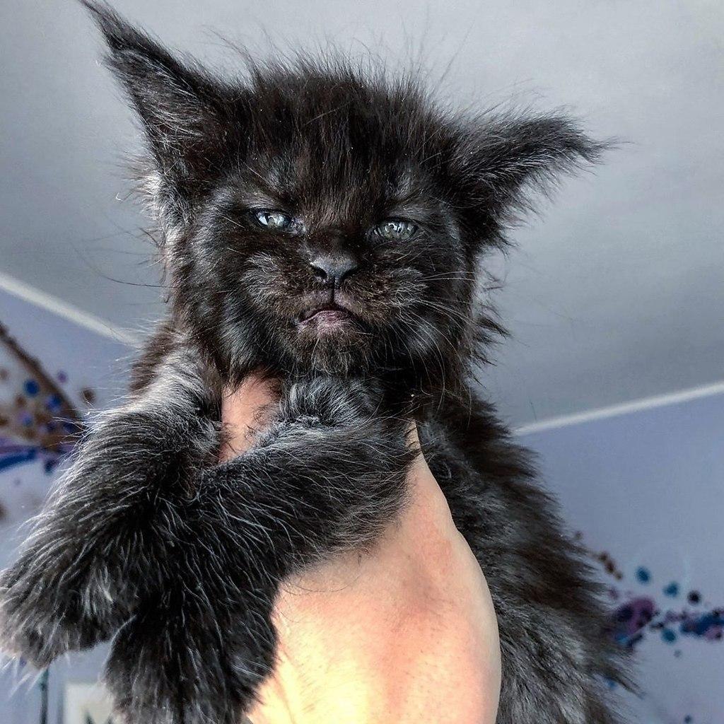 Когда хотел котёночка, но случайно завёл Хтонический Ужас - 4