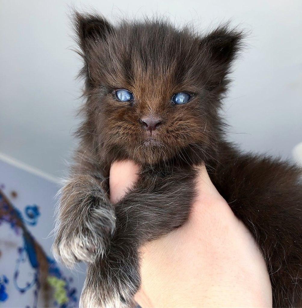 Когда хотел котёночка, но случайно завёл Хтонический Ужас