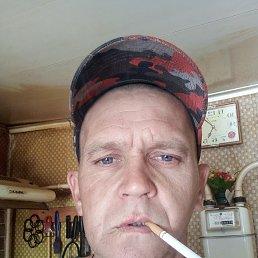 Владимир, 37 лет, Косиха