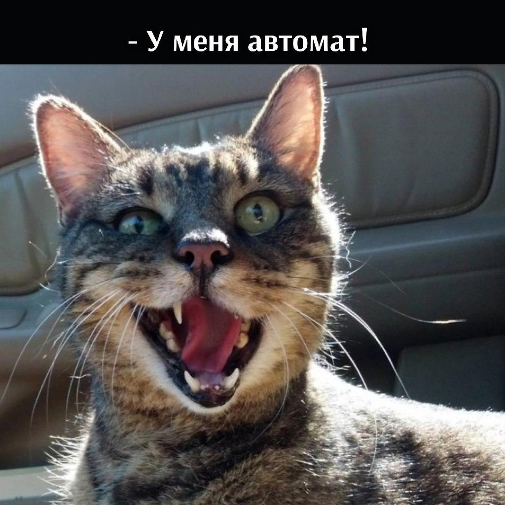 Без кота и жизнь не та - 30 июня 2021 в 15:34 - 2