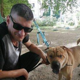 Михаил, 38 лет, Воронеж