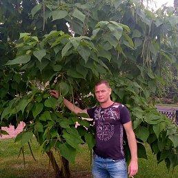 Ден, 33 года, Курск