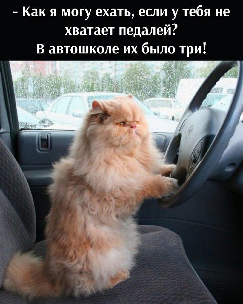 Без кота и жизнь не та - 30 июня 2021 в 15:34